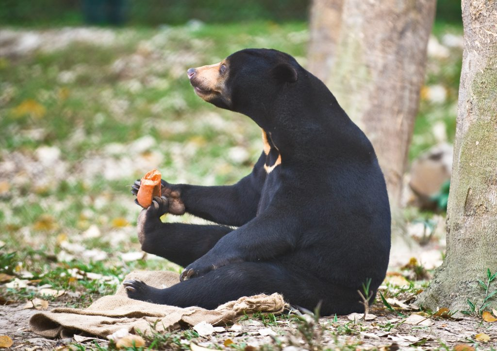 International Association For Bear Research And